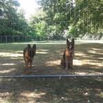 Dorie e Olf, box grandi