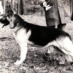 Campione internazionale Gundo von Preussentor